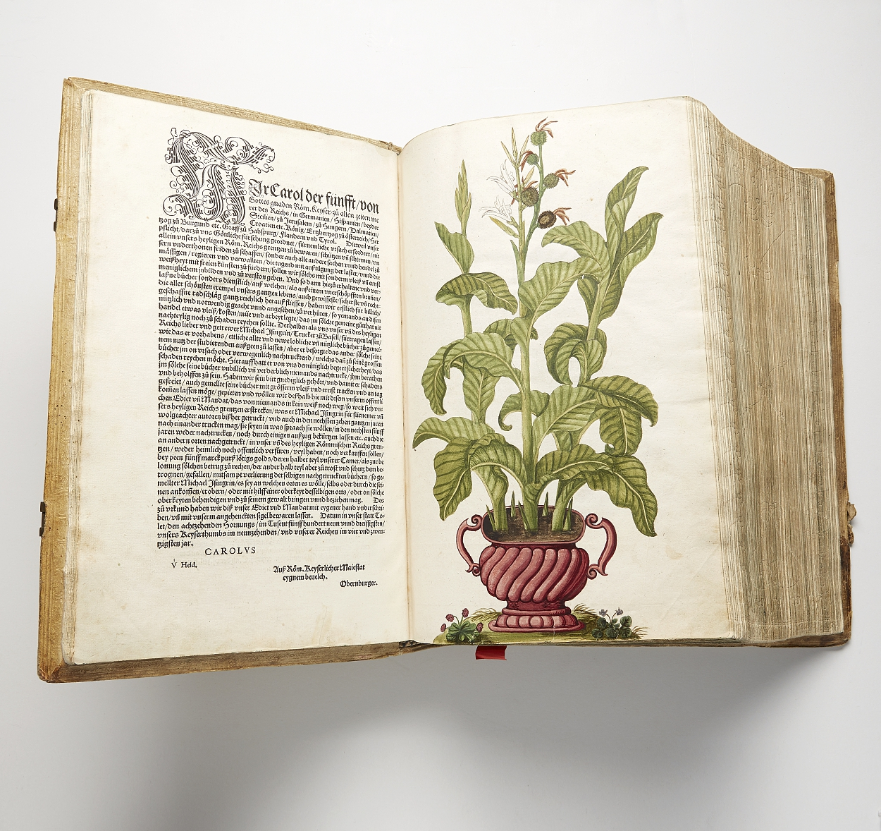 Beautiful herbal by Fuchs, Basel 1543
