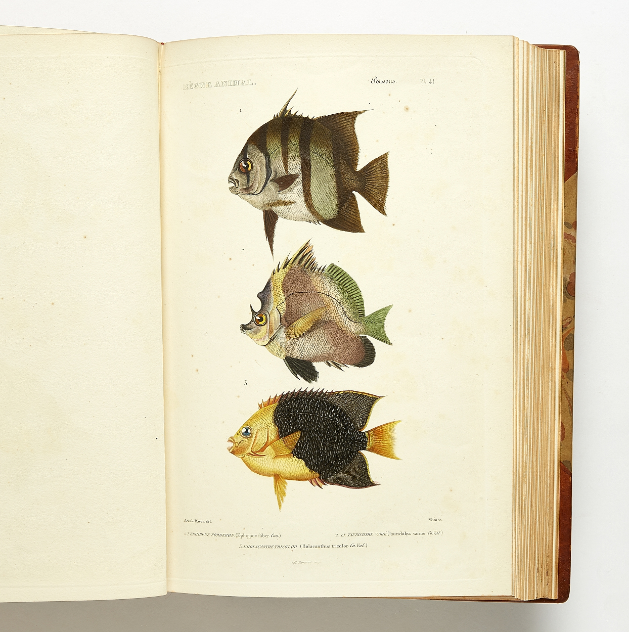 Cuvier Les poissons with fine plates of fish 1836