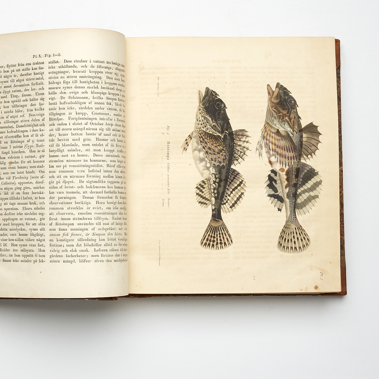 Von Wright's on Scandinavian fishes in 1st edition