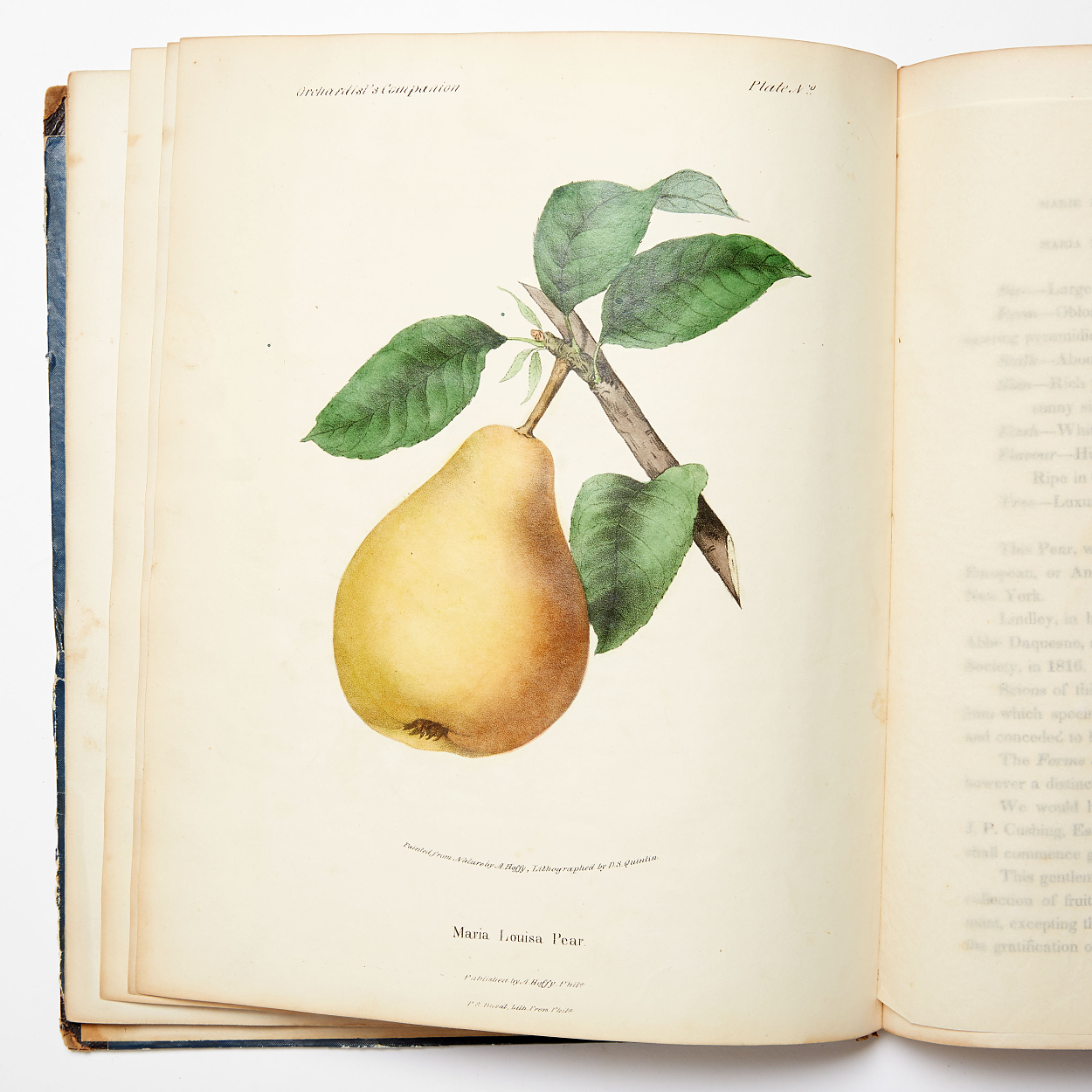 12 hand-coloured plates Orchardist's Companion