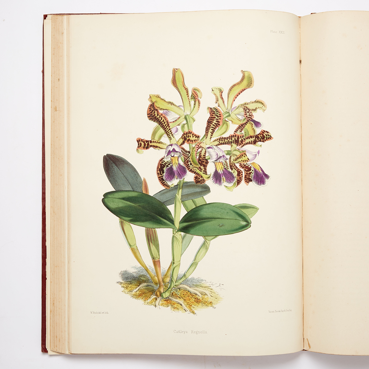 Warner's fine work on orchids 1862-65